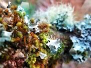 Christmas Yule Moss
